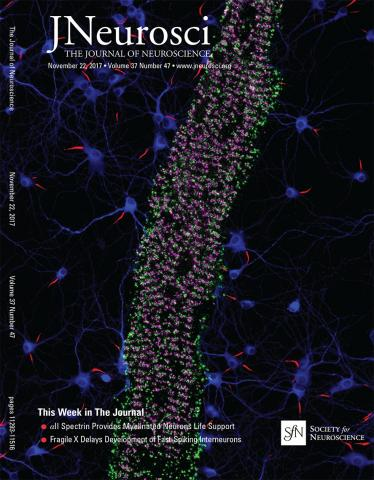 The Journal of Neuroscience: 37 (47)
