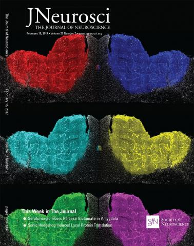 The Journal of Neuroscience: 37 (7)