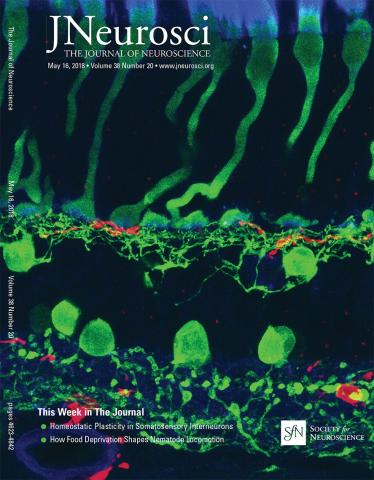 The Journal of Neuroscience: 38 (20)