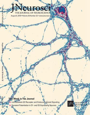 The Journal of Neuroscience: 38 (32)