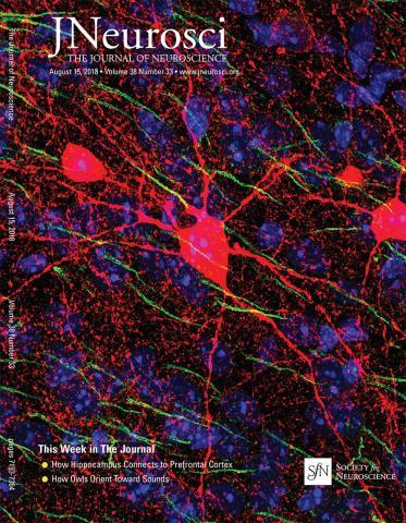The Journal of Neuroscience: 38 (33)