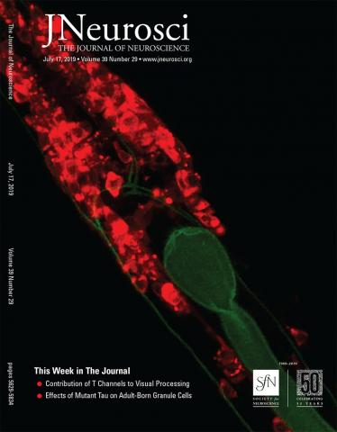 The Journal of Neuroscience: 39 (29)