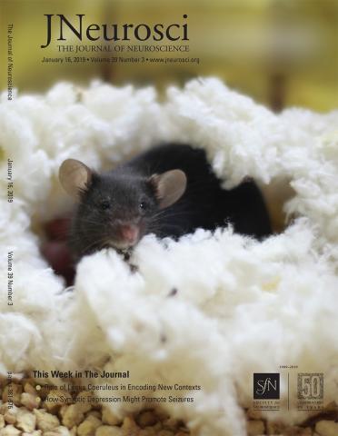 The Journal of Neuroscience: 39 (3)