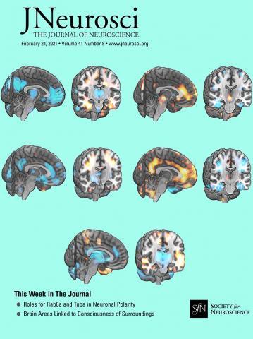 The Journal of Neuroscience: 41 (8)
