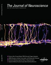The Journal of Neuroscience: 31 (19)