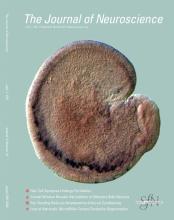 The Journal of Neuroscience: 31 (22)
