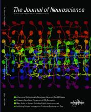 The Journal of Neuroscience: 31 (44)