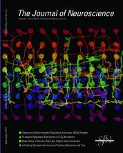 The Journal of Neuroscience: 31 (44)