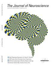 The Journal of Neuroscience: 32 (17)