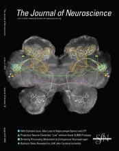 The Journal of Neuroscience: 32 (24)