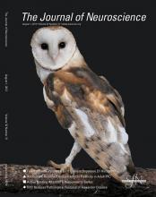 The Journal of Neuroscience: 32 (31)