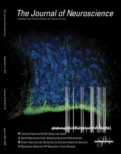 The Journal of Neuroscience: 32 (36)