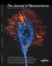 The Journal of Neuroscience: 32 (37)