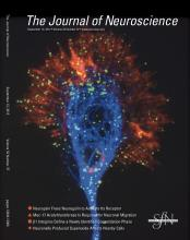 The Journal of Neuroscience: 32 (37)