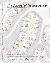 The Journal of Neuroscience: 32 (42)