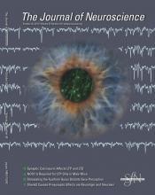 The Journal of Neuroscience: 32 (43)