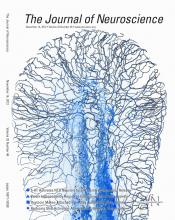 The Journal of Neuroscience: 32 (46)