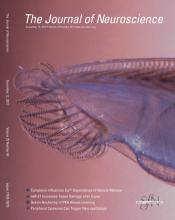 The Journal of Neuroscience: 32 (50)