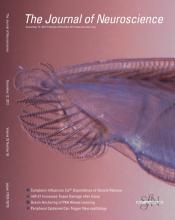 The Journal of Neuroscience: 32 (50)