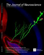 The Journal of Neuroscience: 33 (11)
