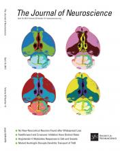 The Journal of Neuroscience: 33 (15)