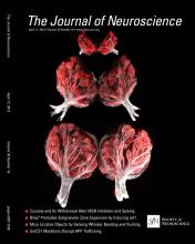 The Journal of Neuroscience: 33 (16)