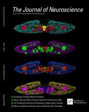 The Journal of Neuroscience: 33 (18)