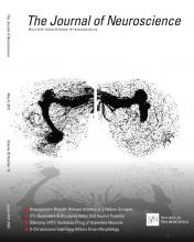 The Journal of Neuroscience: 33 (19)