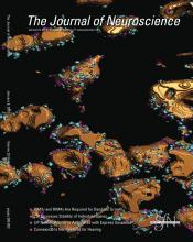 The Journal of Neuroscience: 33 (2)