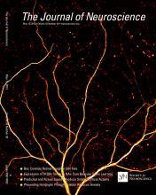The Journal of Neuroscience: 33 (20)