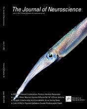 The Journal of Neuroscience: 33 (24)