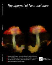 The Journal of Neuroscience: 33 (25)