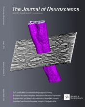 The Journal of Neuroscience: 33 (27)