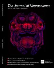 The Journal of Neuroscience: 33 (30)