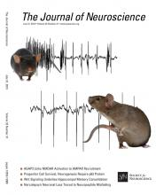 The Journal of Neuroscience: 33 (31)