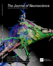 The Journal of Neuroscience: 33 (34)