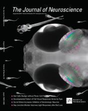 The Journal of Neuroscience: 33 (35)