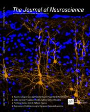 The Journal of Neuroscience: 33 (36)