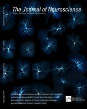The Journal of Neuroscience: 33 (40)