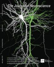 The Journal of Neuroscience: 33 (43)