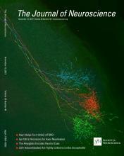 The Journal of Neuroscience: 33 (46)
