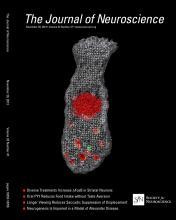 The Journal of Neuroscience: 33 (47)