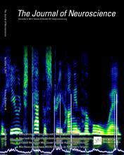 The Journal of Neuroscience: 33 (49)
