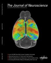 The Journal of Neuroscience: 33 (5)