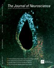 The Journal of Neuroscience: 33 (50)