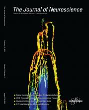 The Journal of Neuroscience: 33 (7)