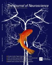 The Journal of Neuroscience: 34 (13)