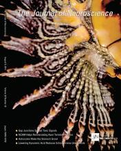 The Journal of Neuroscience: 34 (32)