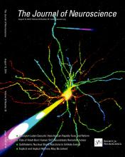 The Journal of Neuroscience: 34 (33)