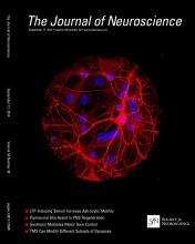 The Journal of Neuroscience: 34 (38)